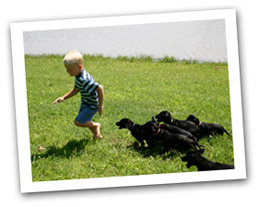 boy being chased by puppies